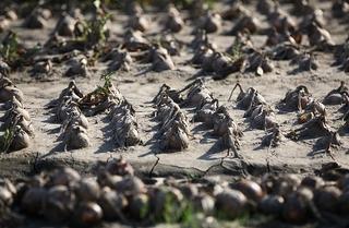 Дожди в Приморье подтопили сельхозугодия Уссурийска и Хасанского района