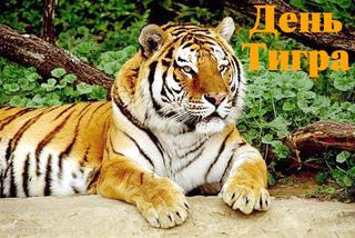 День тигра впервые широко отметят в Уссурийске