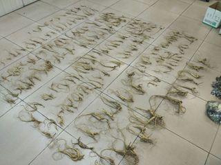 Уссурийские таможенники обнаружили под обшивкой автомобиля корни женьшеня, трепанг и дериваты животных