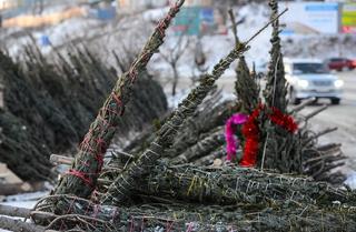 26 ёлочных базаров откроется в Уссурийске в середине декабря