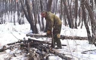 Акция «Чистый лес» стартовала в Уссурийском городском округе