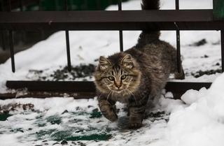 Сильные морозы ожидаются в Приморье