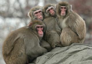 Обезьяны в зоопарке Приморья ведут обычный образ жизни в морозы