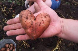 На «Хороводе дружбы» выберут самые необычные экземпляры овощей и фруктов