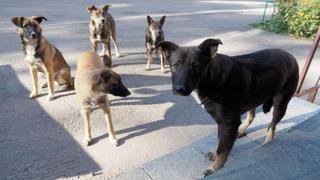 В Уссурийске с начала года отловлено около 200 голов безнадзорных животных