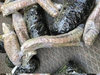 Рога сайгака и сушеный трепанг задержали уссурийские таможенники