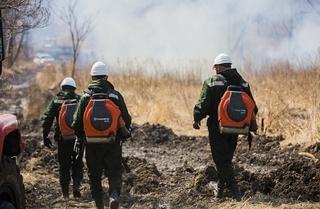 Лесной пожар ликвидировали в Уссурийске