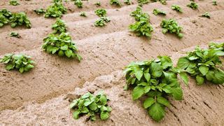 Памятник археологии засадили картошкой в Уссурийске