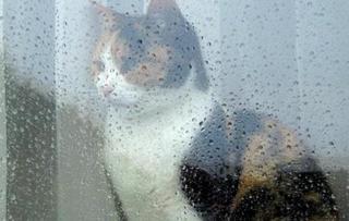 Аварийные службы Приморья готовятся к новым сильным дождям
