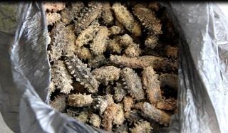 За два дня около 7 кг сушеного трепанга задержали уссурийские таможенники