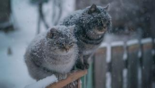 Внимание, снег!