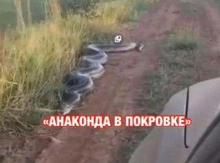 Видео с гигантской анакондой в Приморье напугало людей