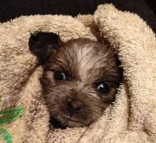 Почти 20 часов под землей: в Приморье спасли месячного щенка
