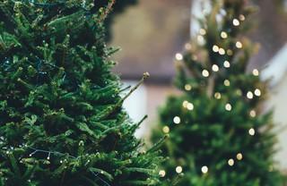 Ёлочный базар в Уссурийске откроется с 18 декабря