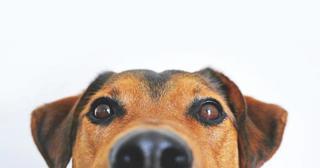 «Собаки знают толк»: