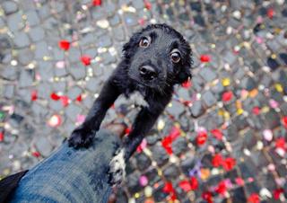 Агрессивные бездомные собаки или дворовые загулявшие псы?