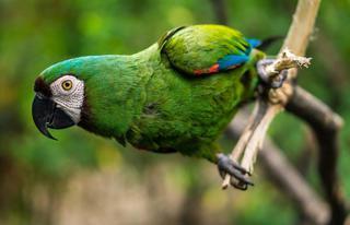 Умнейшая птица: пернатый покупатель в супермаркете порадовал приморцев
