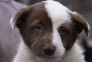 Более 200 кошек и собак нуждаются в вашей помощи