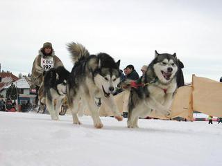 Традиционные гонки на собачьих упряжках прошли в Приморье