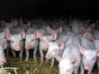 В Уссурийске продолжается строительство животноводческих комплексов