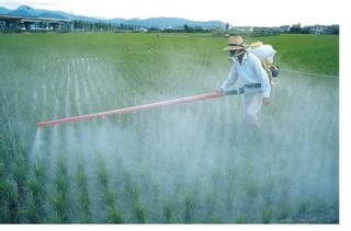 В Приморье пресечено применение партии запрещённых пестицидов иностранного производства