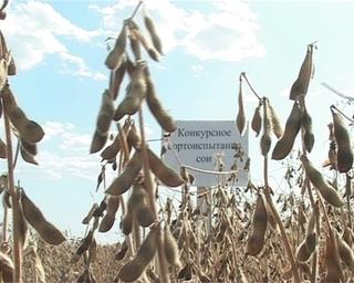 В Уссурийском районе сою начали убирать на 10 дней раньше обычного