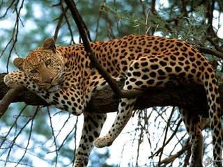 Вторые сутки горит заказник с вымирающими дальневосточными леопардами