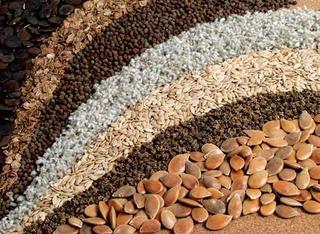 Жителям Уссурийска предлагали семена сомнительного качества