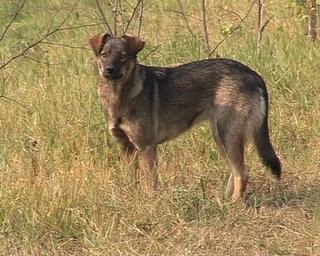 Жители Ленинградской обеспокоены нападениями бездомных собак