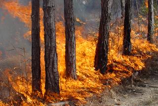 Пять природных пожаров потушены в Приморье за минувшие сутки