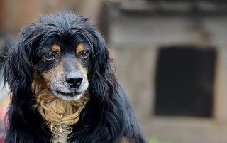 Протяните «Руку помощи» бездомным животным