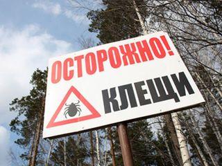 Более пяти тысяч жителей Приморья пострадали от укусов клещей с начала сезона