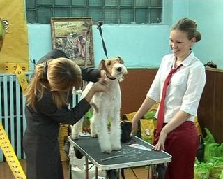 Среди собак  со всего Дальнего Востока выбрали лучших