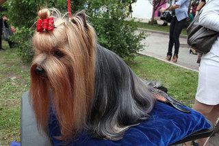 В Уссурийске прошел парад четвероногих чемпионов