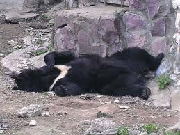 Десять медведей из частного питомника в селе Дубовый Ключ взяты под опеку природоохранной организацией